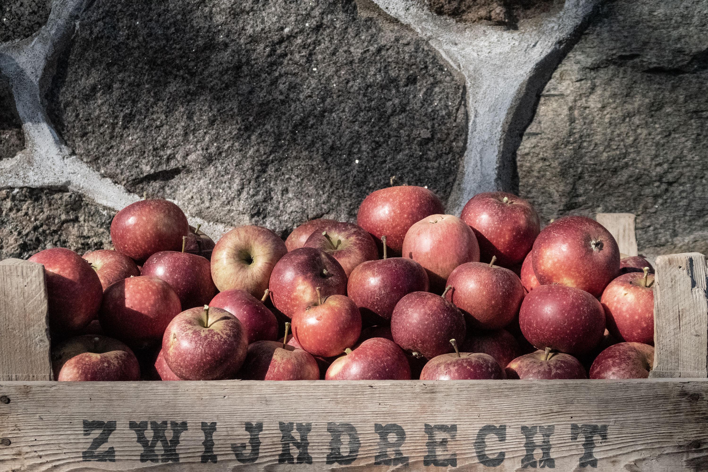 Apple Harvest in Hunnestad