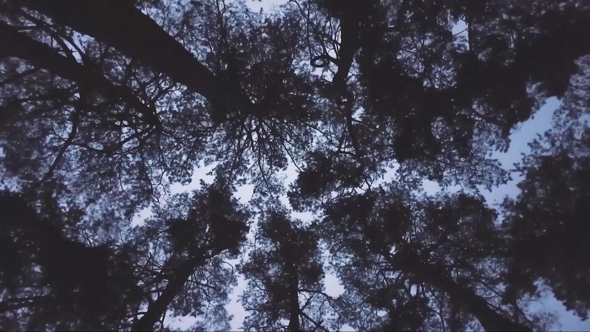 Autumn 2019 Playlist