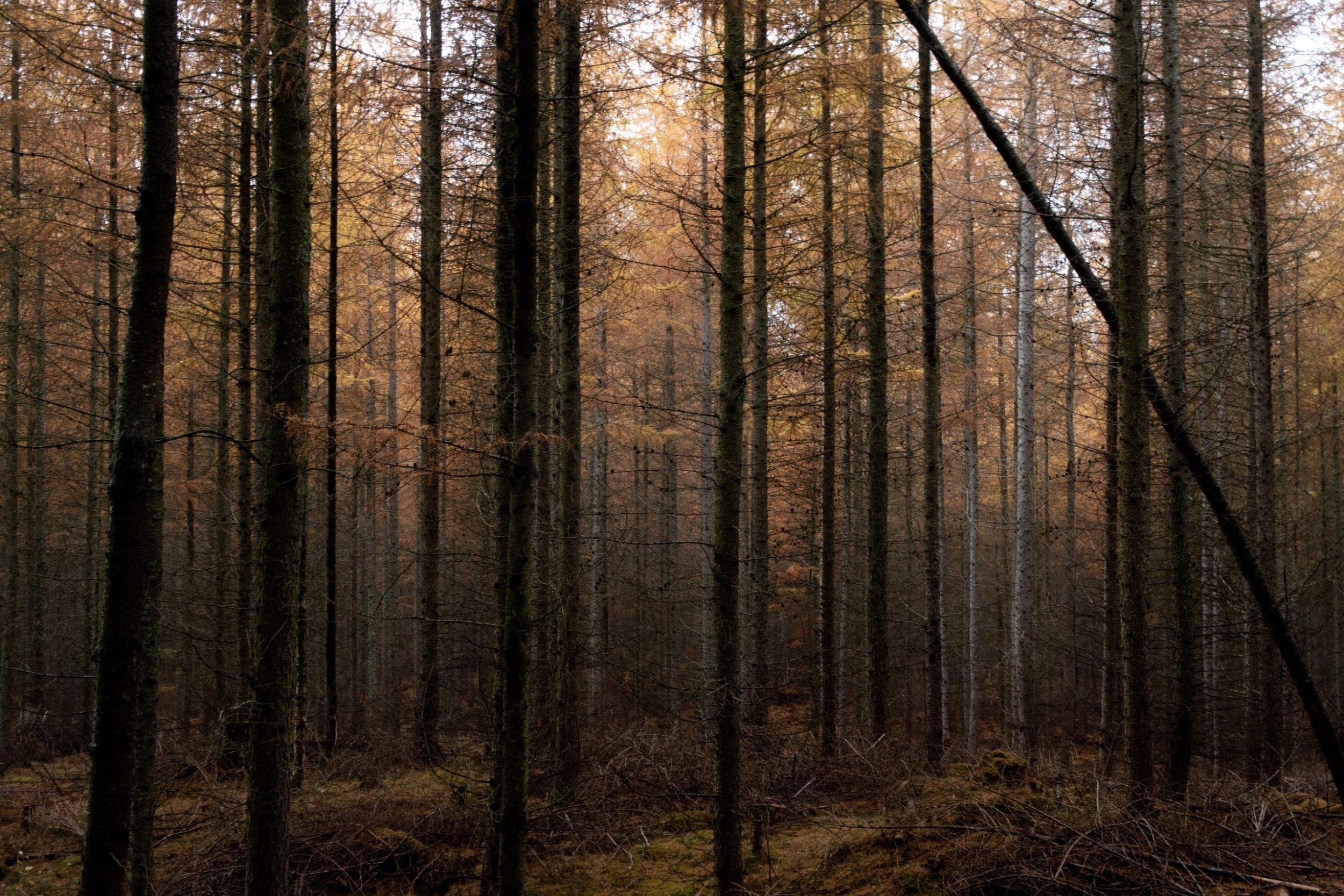Hiking in Snogeholm
